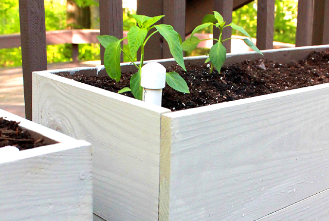 Raised bed - featured image