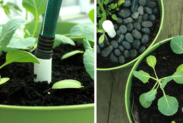 Sub-Irrigated Planters - featured image