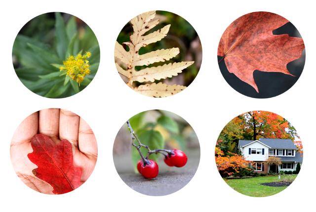 Fall Backyard - featured image
