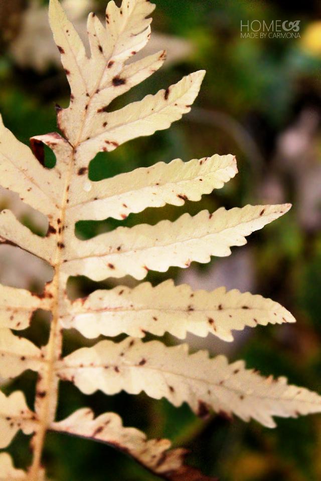 Fall Backyard - golden fern 1