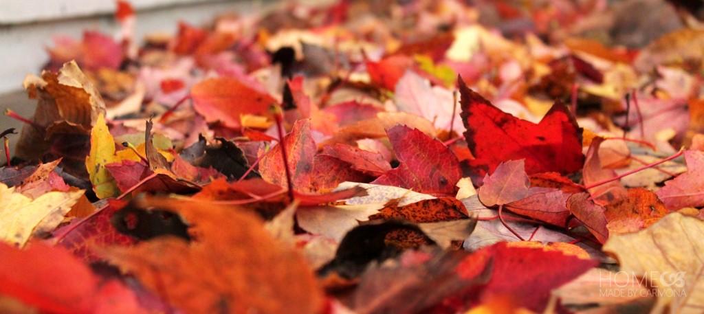 Fall Backyard - red leaves