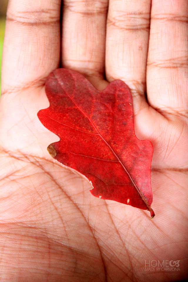 Fall leaves - red leaf