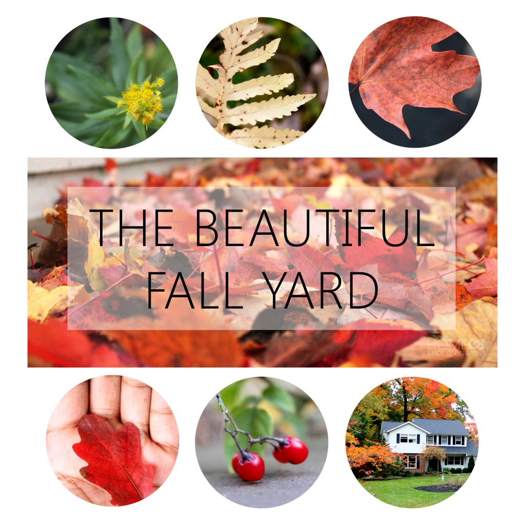 The Beautiful Fall Yard 2