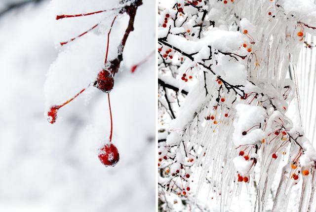 Winter Wonderland -featured image