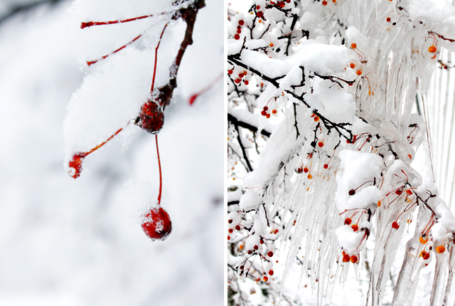 Winter Wonderland -featured image