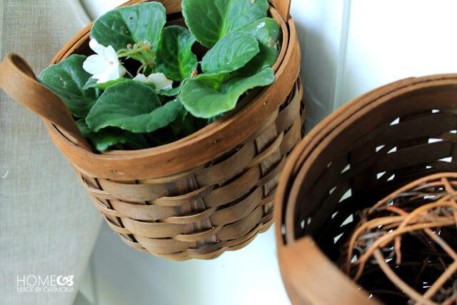 Plants kept in baskets