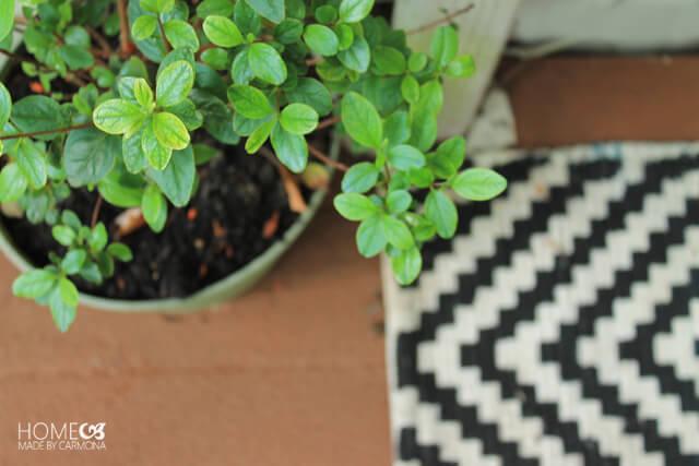 Potted plants - deck design