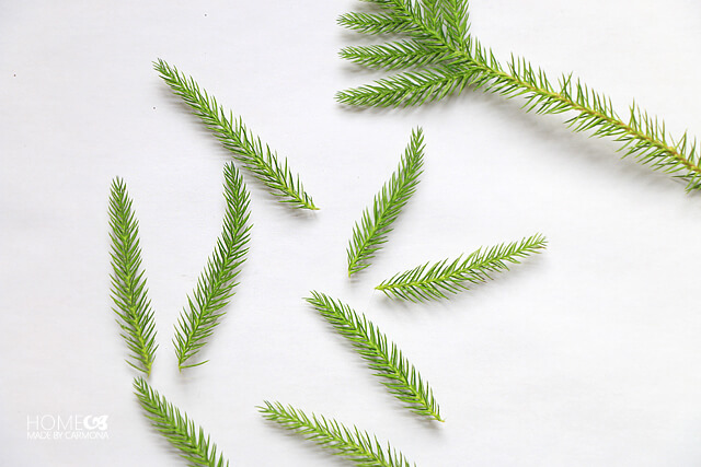 evergreen-leaves
