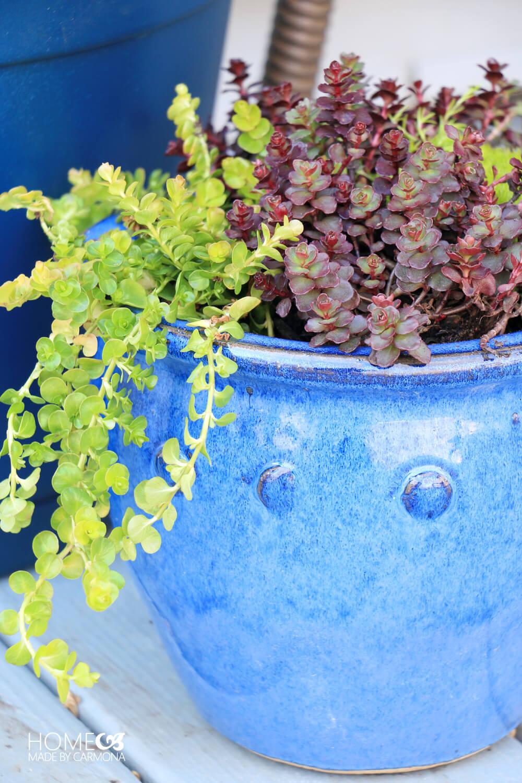 Beautiful mini plants