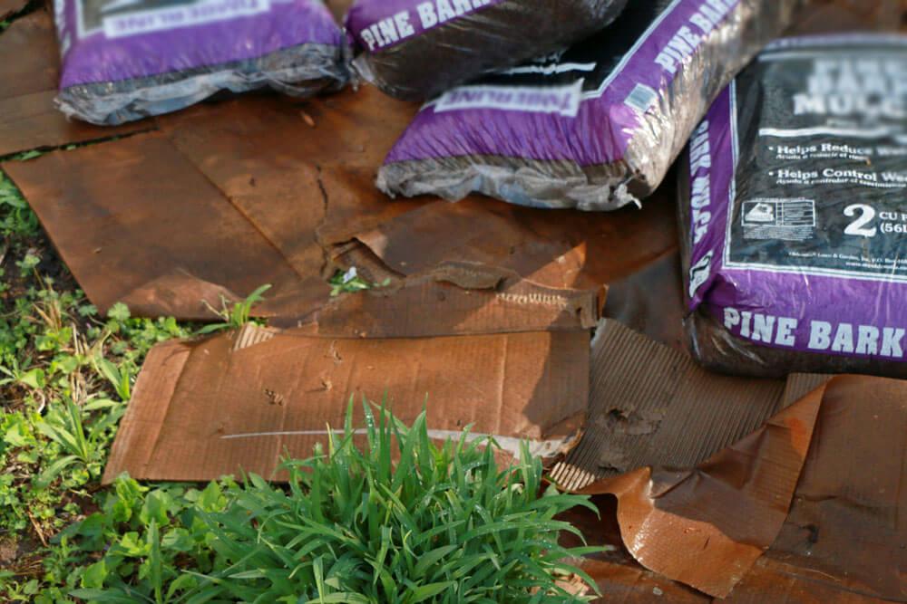 Cardboard - mulch