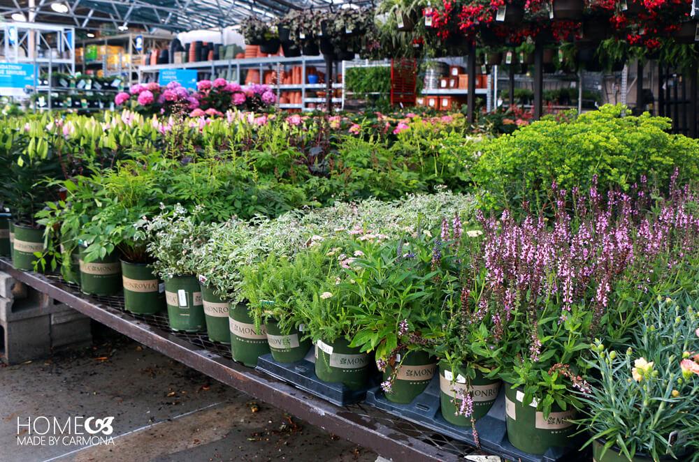 Lowes Home Improvement Store - Monrovia Plants