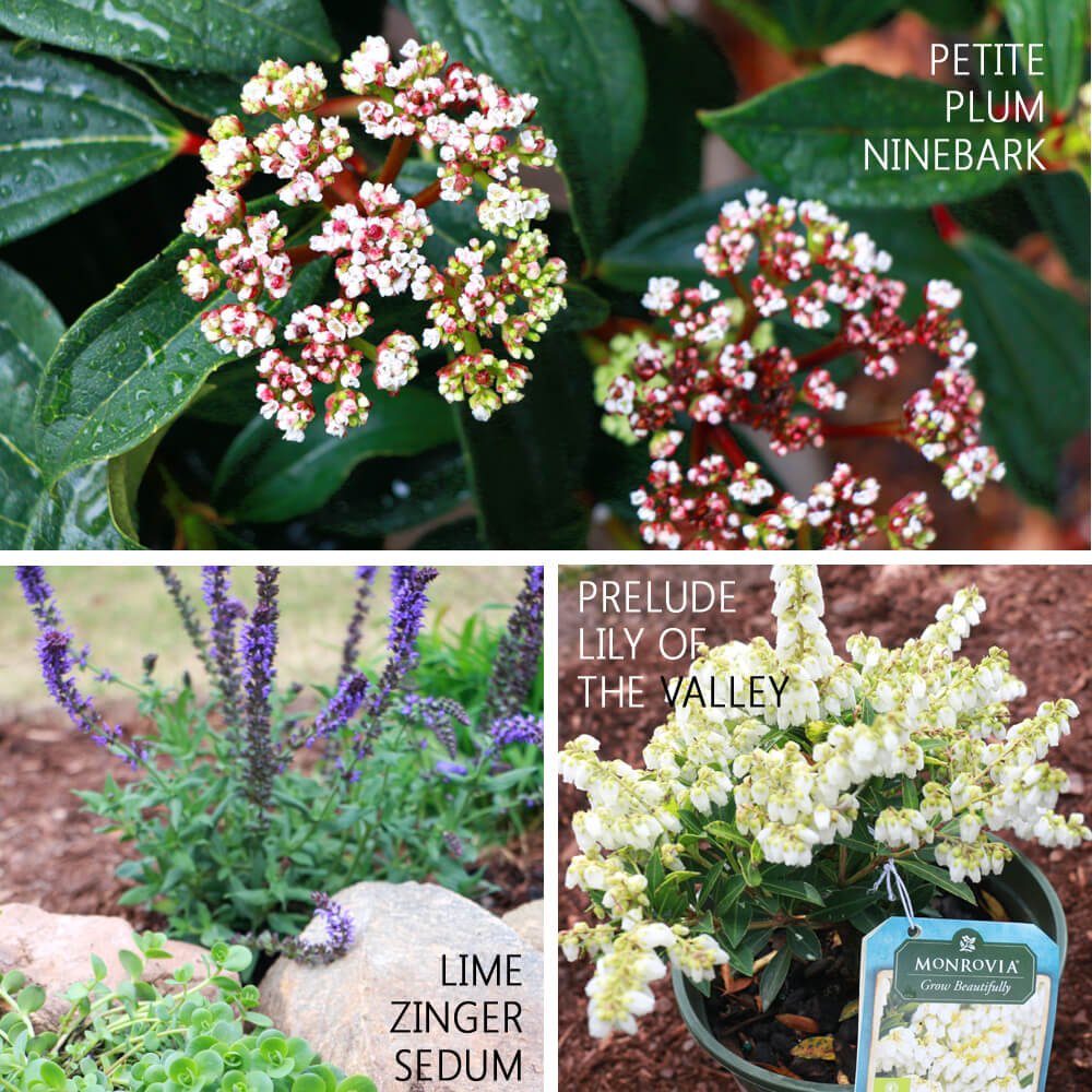 Monrovia Plant Favorites