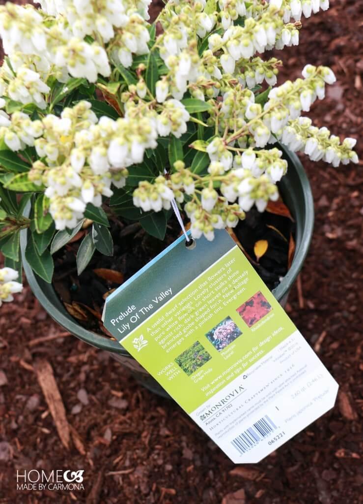 Monrovia Plant tags - plant suggestions