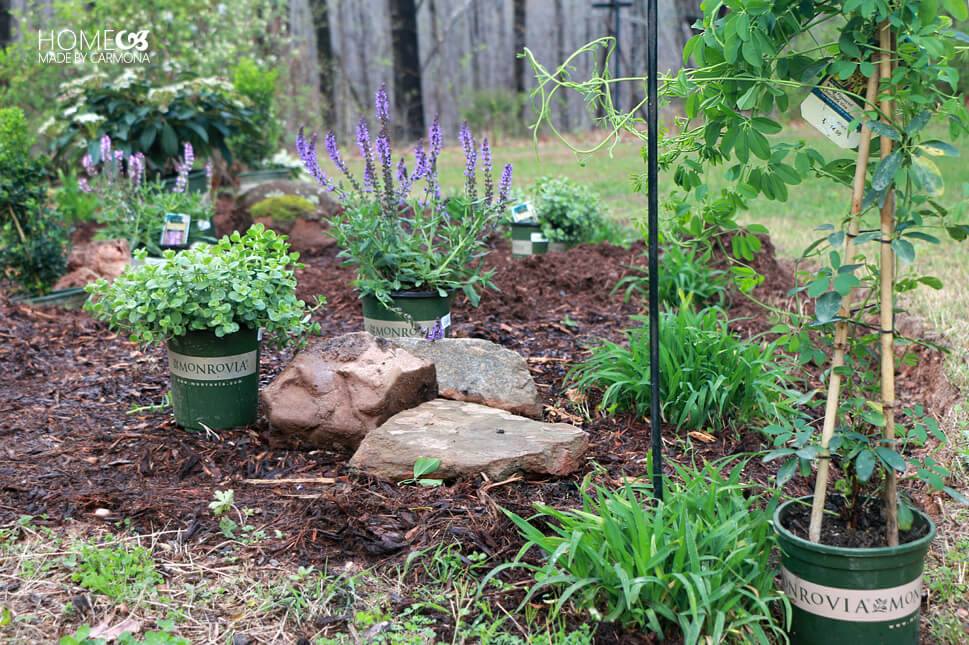 Spring Garden - Monrovia Plants