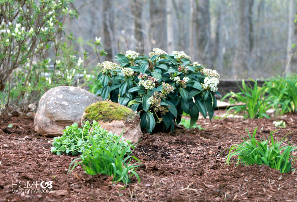 Spring Garden and Landscaping Styling