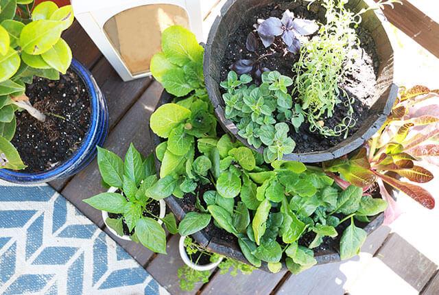 Herban-garden-FI