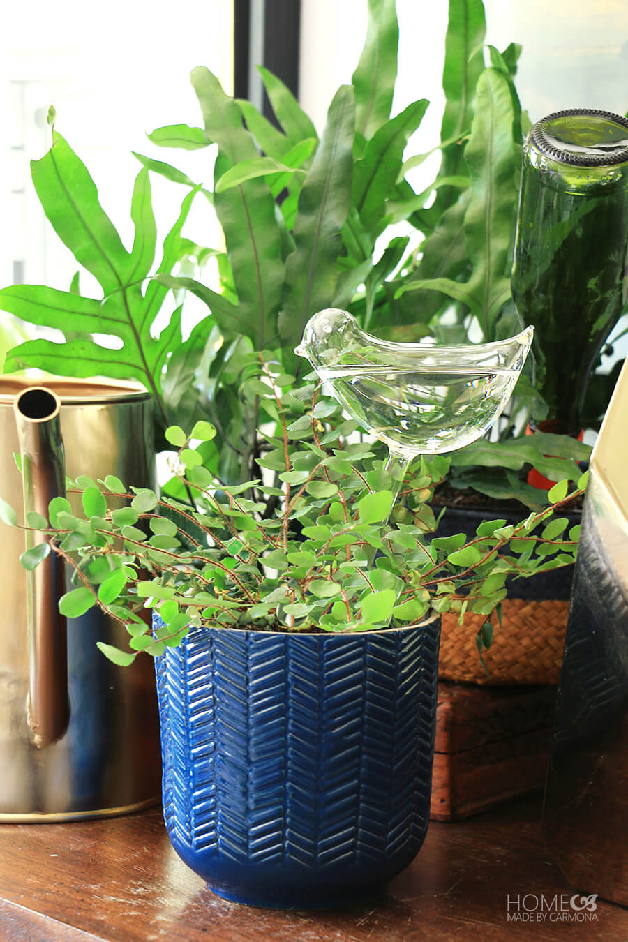 20 Ways To Keep Plants Watered On Vacation   Home Made By Carmona