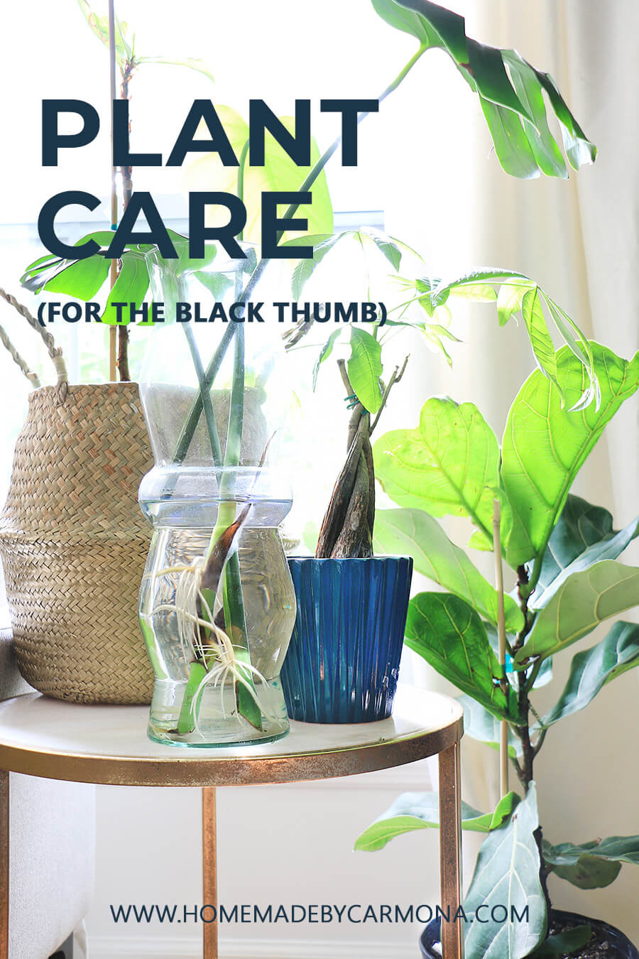 Houseplants-cared-for-in-jar