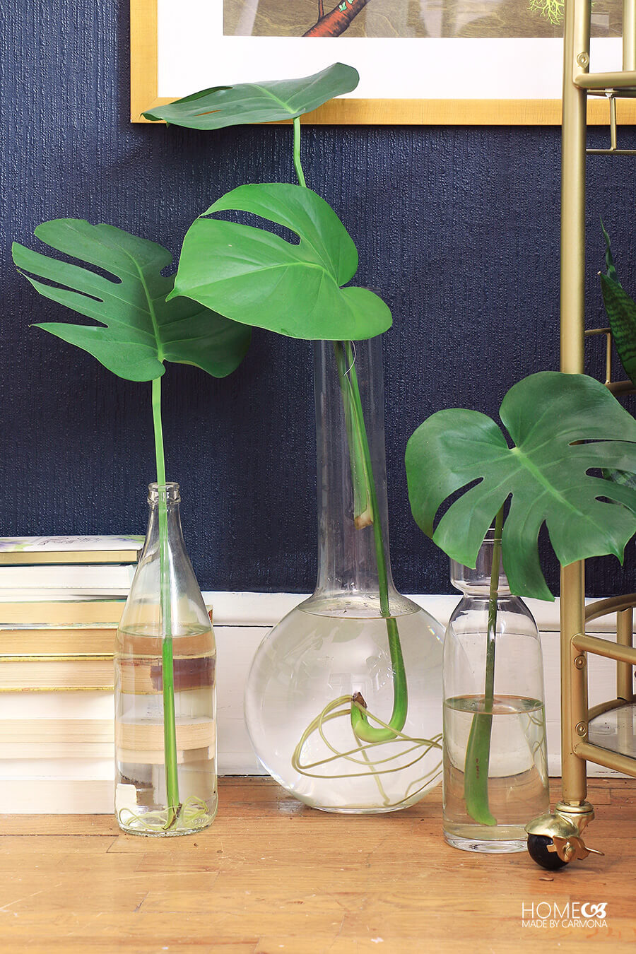 Philodendron-cuttings-with-root