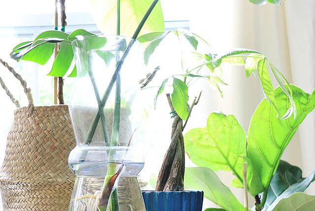 Plant-care-FI