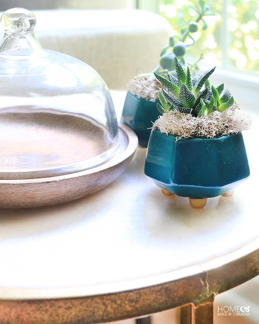 mini-cactus-and-succulent