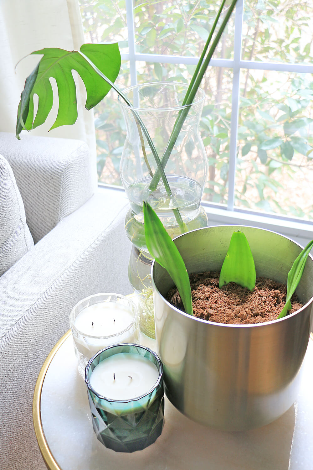 Potted-Snake-plant