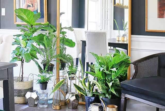 Free-Plants-FI