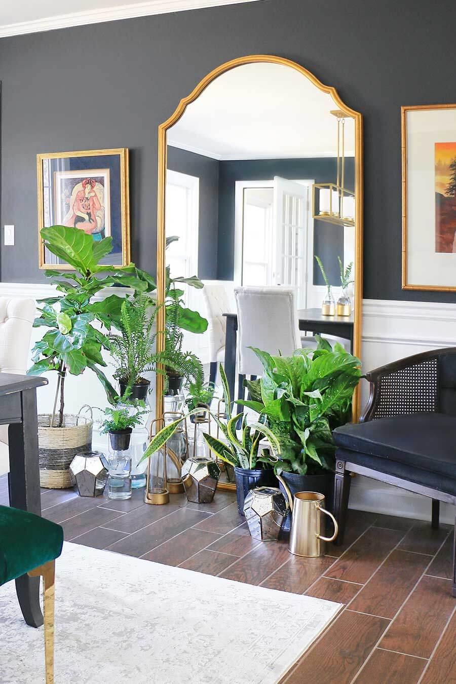 Houseplants in dining room