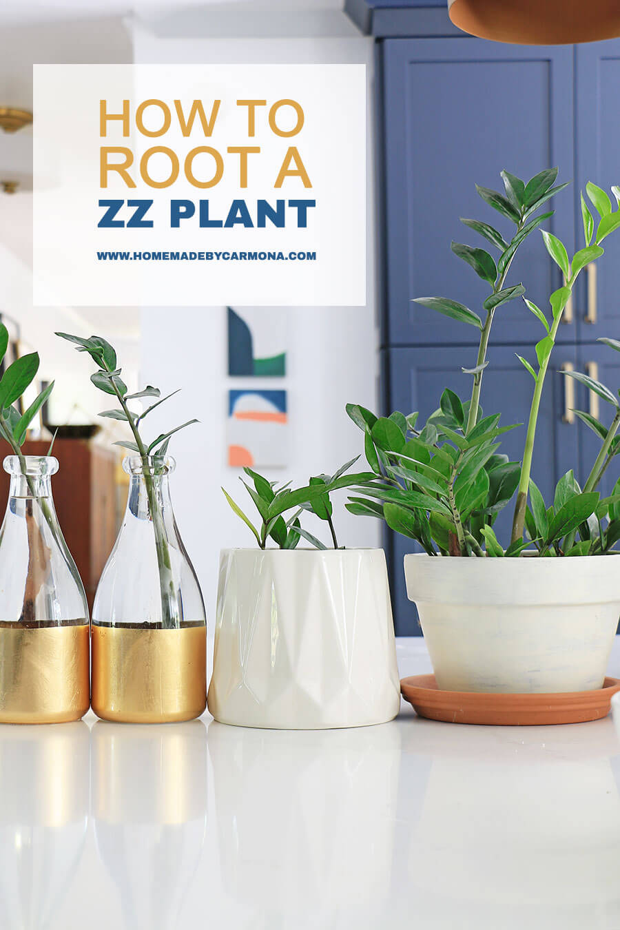 How To Root A ZZ Plant In Water