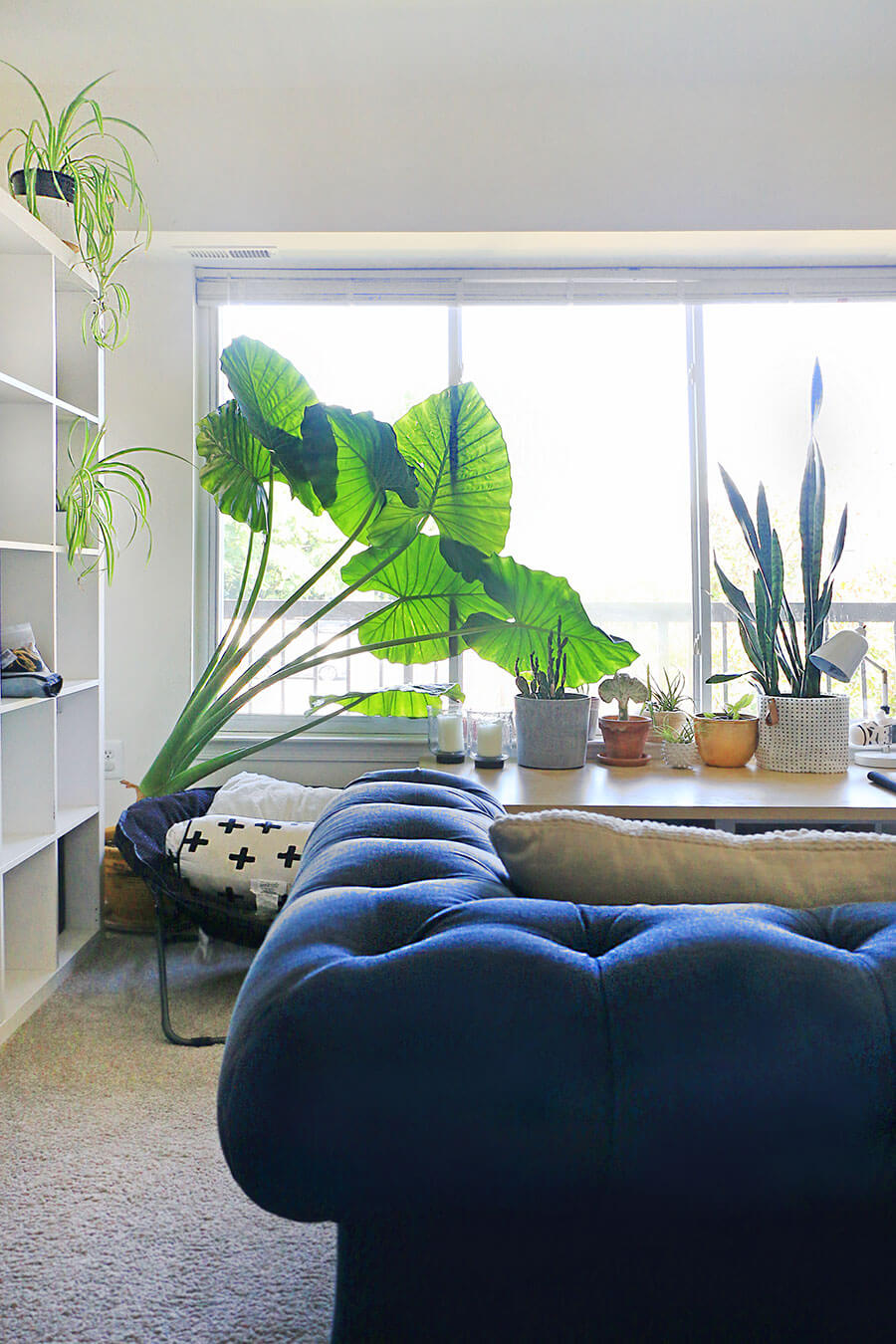 Large-elephant-leaf-in-a-living-room