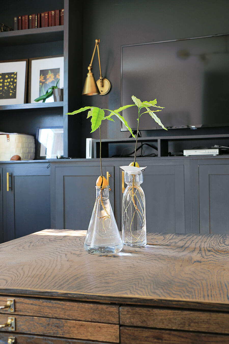 Living-room-with-avocado-plant-centerpiece