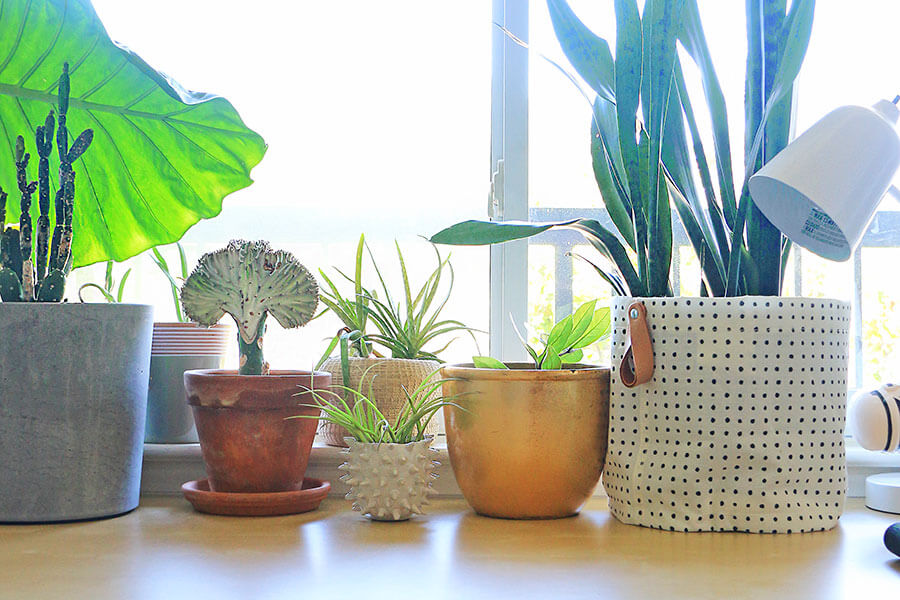 Plants-on-a-windowsill