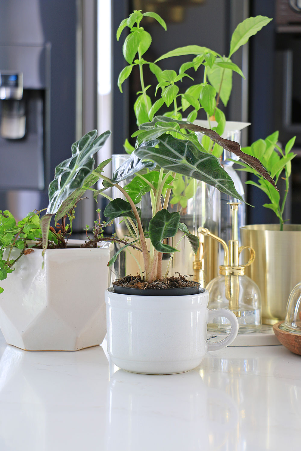 Potted-plants-on-countertop